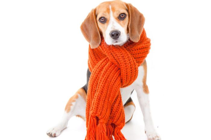 >>> Hundebekleidung