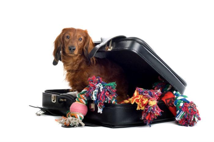 >>> Hundespielzeug