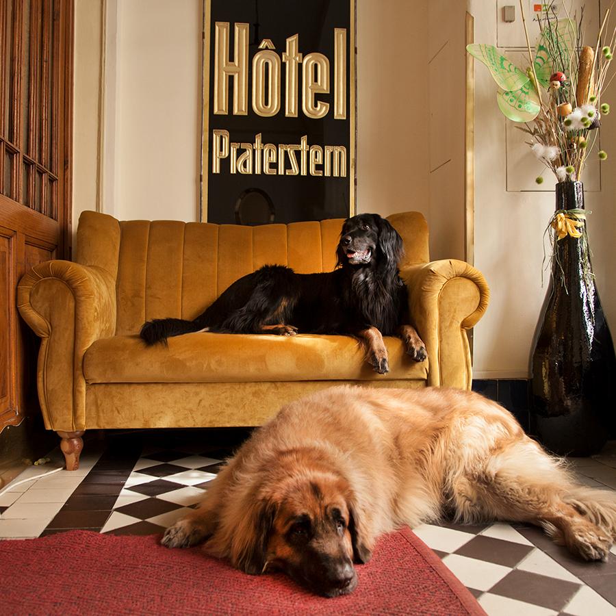 Hotel Praterstern – Ihr hundefreundliches Wiener Hotel