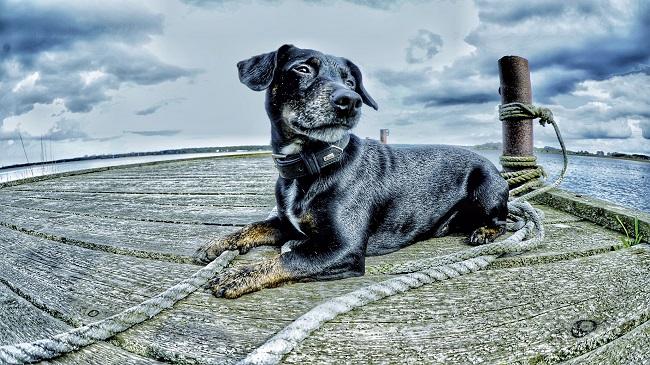 Entspannder Urlaub mit Hund; Hundeurlaub,